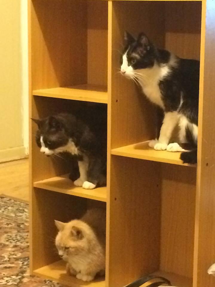 Tidy kitties on a bookshelf