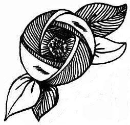 Black and white line drawing of a fabric rose from 1930